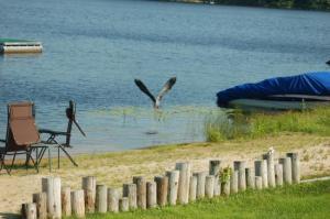 Great Blue Herons Wings span the seasons