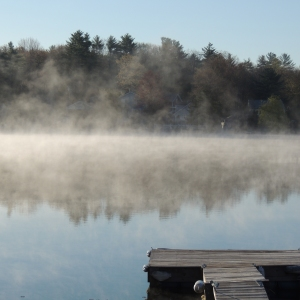 Lake Loons in the morning mist 006