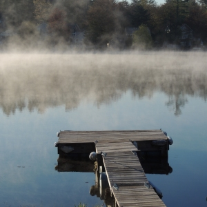 Lake Loons in the morning mist 007