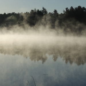Lake Loons in the morning mist 009