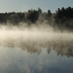 Lake Loons in the morning mist 010