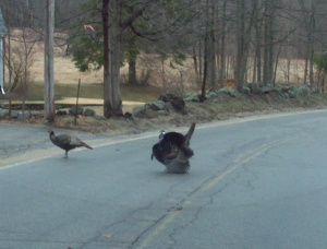Tom Turkey Crossing Guard