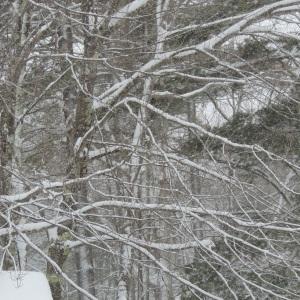 A winter blanket